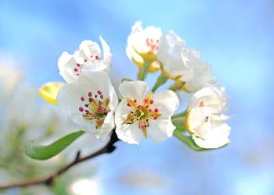 planten-bloemen-08