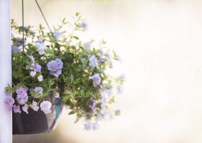 planten-bloemen-20