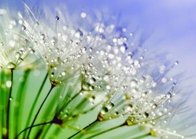 planten-bloemen-33