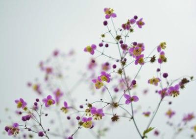 planten-bloemen-34