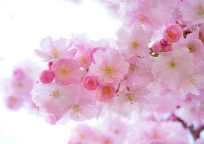 planten-bloemen-35