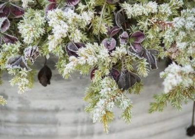 planten-bloemen-41