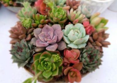 planten-bloemen-42