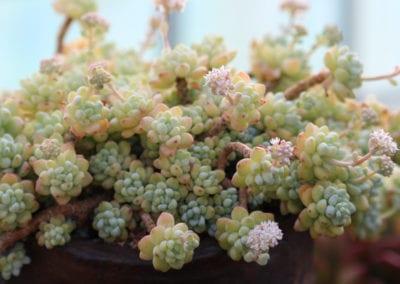planten-bloemen-43